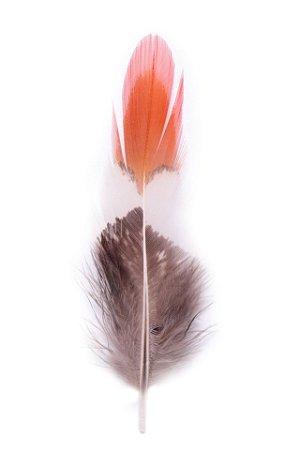 Pena Laranja Branca e Marrom Bird - Coleção Pena