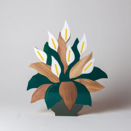 Planta Lirio da Paz - Patricia Maranhão