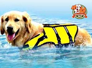 Colete salva-vidas pra cachorro