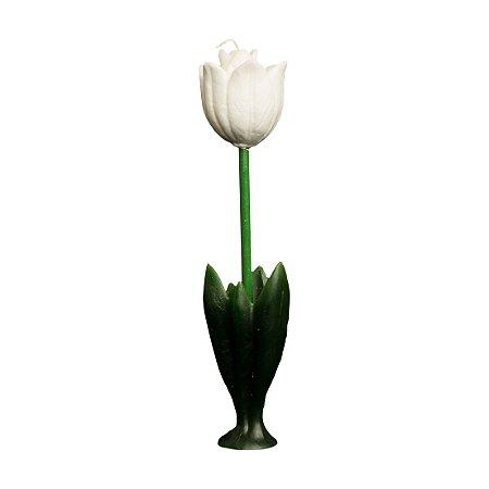 Tulipa Alta
