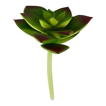 Flor Permanente Suculenta Folhas
