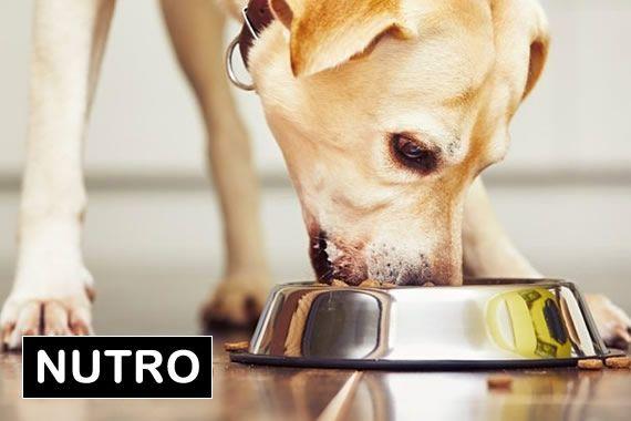 Dia: 10/05/2018 - 18h00 às 18h45 - SALA 03 -Suplementos para cães e gatos: o que temos no Brasil e quando usar?