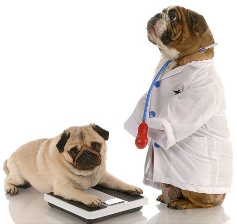 Dia: 10/05/2018 - 15h00 às 15h45 - SALA 06 -Monitorização do DM em cães
