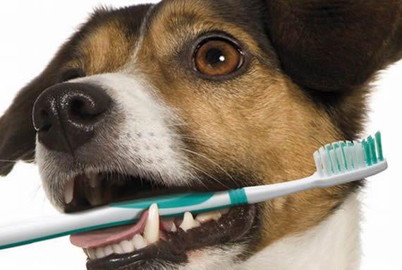 Dia: 11/05/2018 - 12h00 às 12h45 - SALA 07 -  Odontologia veterinária em zoológicos: uma realidade