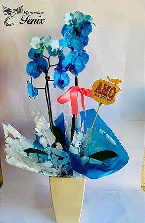 Orquídea phalaenopolis Azul Místico