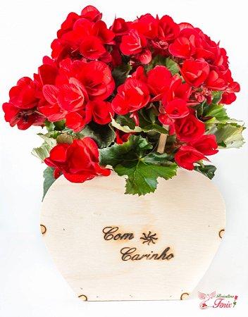 Begônia Vermelha com carinho