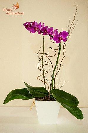 Deslumbrante Phalaenopsis pink