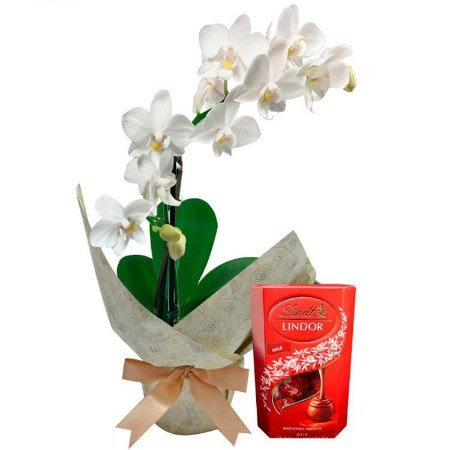 Mini Orquídea Rara e Lindt