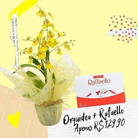 Orquidea Chuva de Ouro e Rafaello