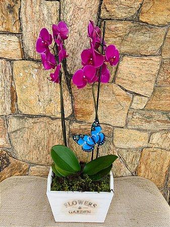 Orquídea Phaleonopolis com borboleta
