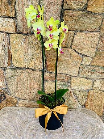 Rara orquídea amarela
