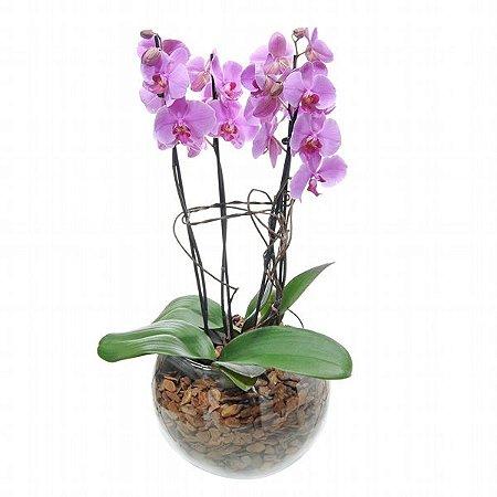 Arranjo de Orquídea Phalaenópsis Lilás 4 Hastes