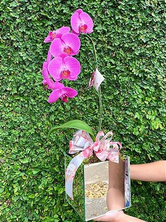 Orquídea pink cascata no vaso de espelhado