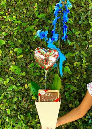 Orquidea Phaleonopolis Azul com Chocolate ''Mãe eu Te amo''