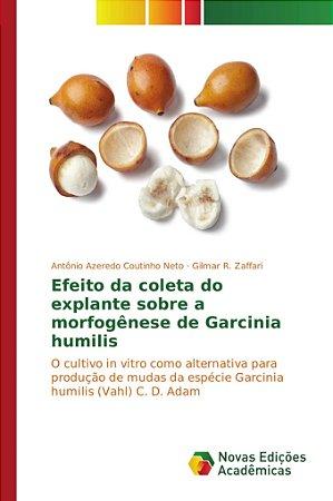 Efeito da coleta do explante sobre a morfogênese de Garcinia humilis