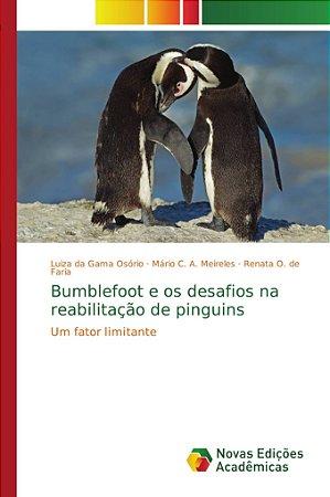 Bumblefoot e os desafios na reabilitação de pinguins