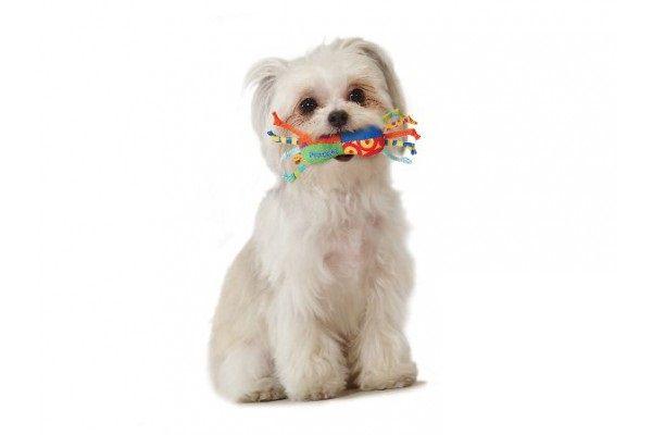 Brinquedo para Cachorro Mini Halteres Geladinho com Fitas Cool Chew Mini Petstages