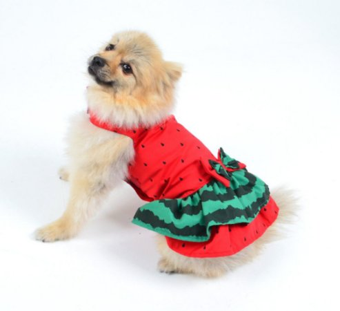 Vestido para Cachorro | Gato Melancia