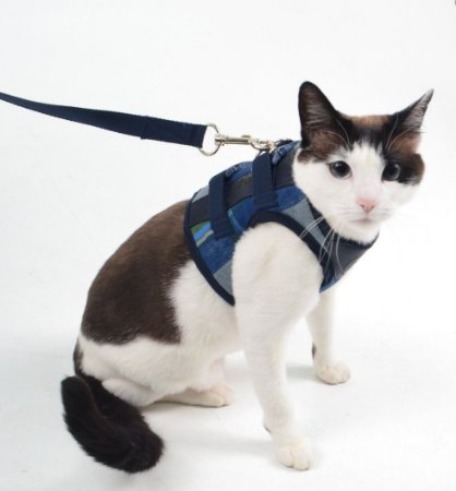 Peitoral com Guia para Gato Xadrez