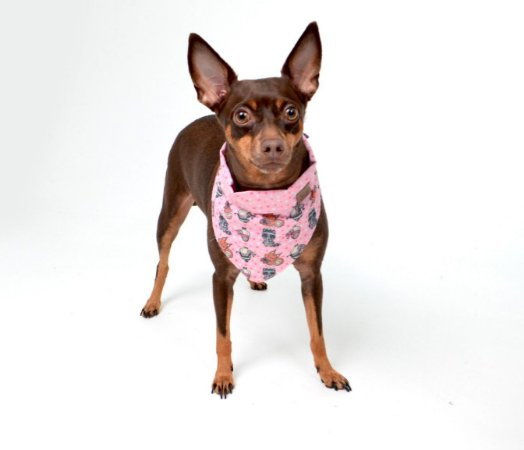 Bandana Dupla Face para Cachorros | Gatos Valiant Rosa