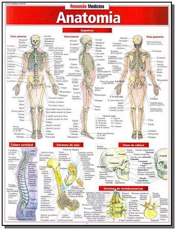 Resumao Medicina  - Anatomia
