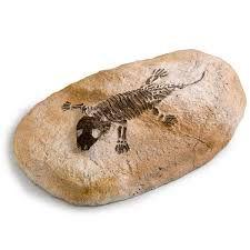 Pedra artificial com fóssil para decoração
