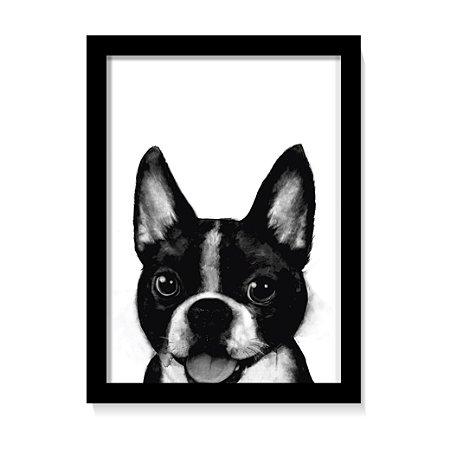 Quadro Decorativo Cachorro Boston Terrier