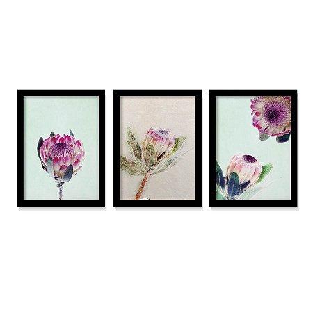 Kit 3 Quadros Flores Protea Botânico