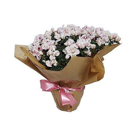 7e077cd88 Vaso de Azaleia Rosa - Flores da Vila