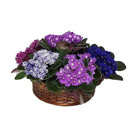 Jardim de Violetas