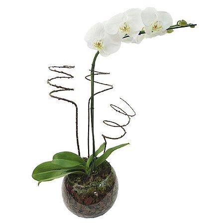 Orquídea Phalaenópsis Branca no Aquário