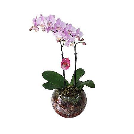 Mini Orquidea Rosa no Vaso