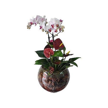 Mini Orquídea e Antúrio no Vaso