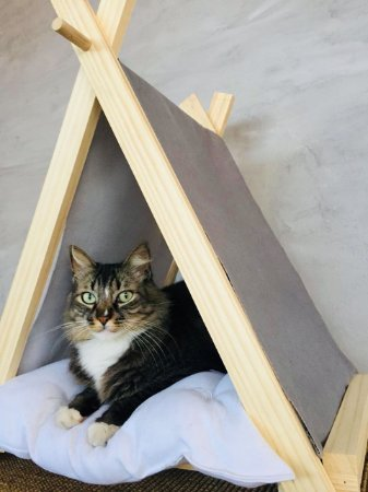 Cat Tenda Cinza