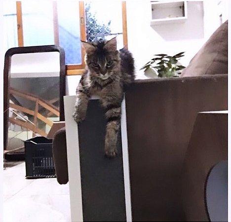 Arranhador de sofá - Cinza
