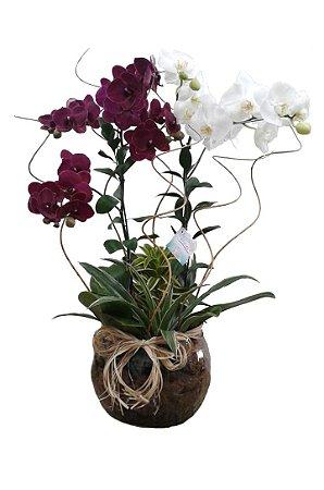 Duo de Orquídeas