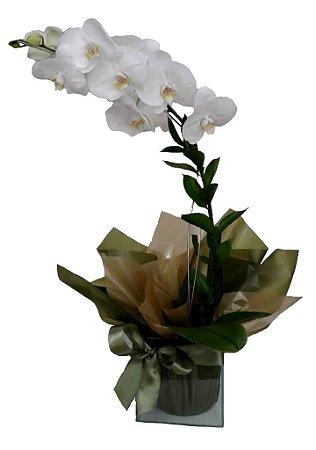 Orquídea no vidro