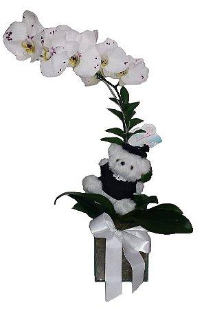 Orquídea formatura