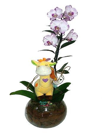 Orquídea para bebê
