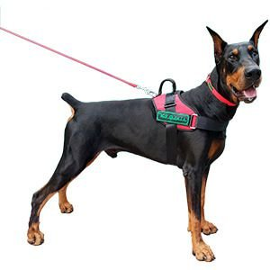 Peitoral Tático para Cães – K9 Spirit