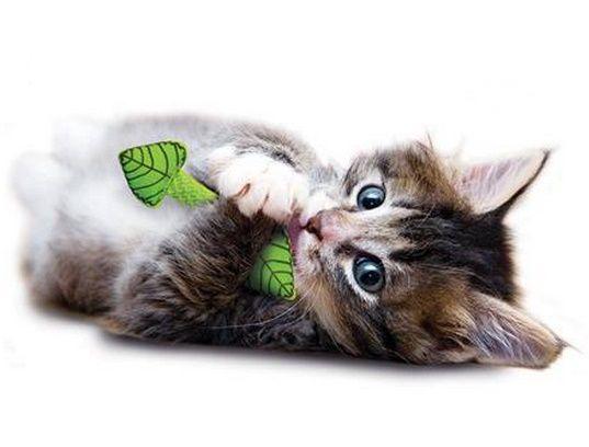 Brinquedo para Gatos Fresh Breath Mint Stick - Petstages