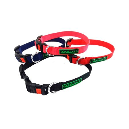 Coleira Collar Safety - K9 Spirit