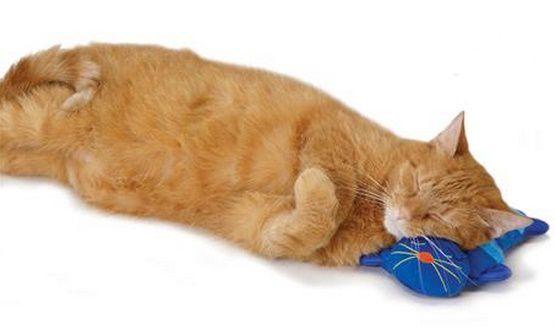 Almofada que esquenta para Gatos - Kitty Cuddle