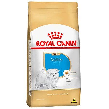 Ração Royal Canin Maltês - Cães Filhotes