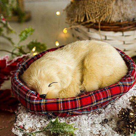 Cachorrinho Labrador Deitado