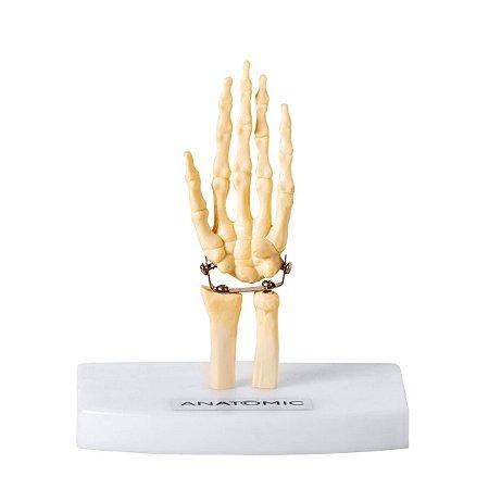 Esqueleto da Mão Tamanho Mini