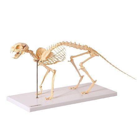 Esqueleto de Gato em Resina