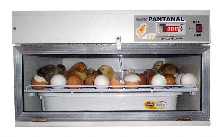 Chocadeira Pantanal SEMI-AUTOMATICA 70 ovos de galinhas, 100% Digital, Ventilação Forçada