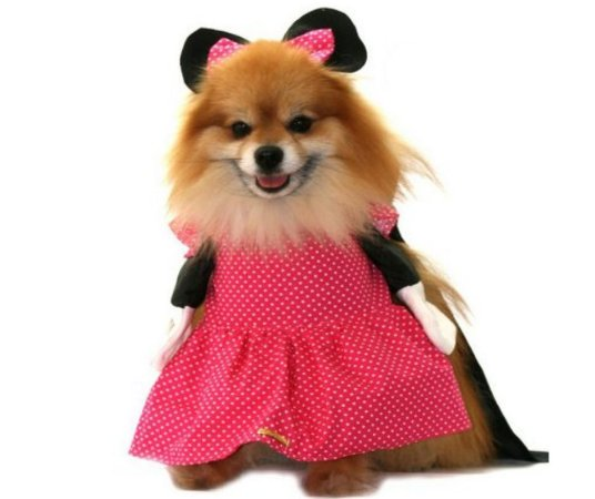 Fantasia de Minnie Rosa para Pet tam GG