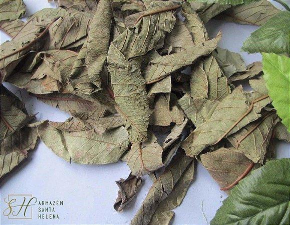 FOLHAS DE GOIABEIRA 100G (Psidium Guajava)